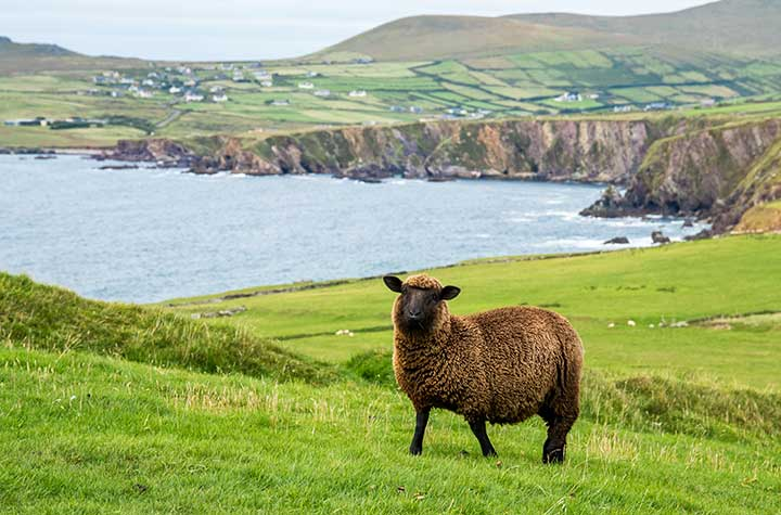 Ireland - mystical, magical and home to over 3 million sheep